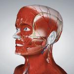 Human İnsan Anatomisini 3 Boyutlu İncele [Chrome Eklenti]